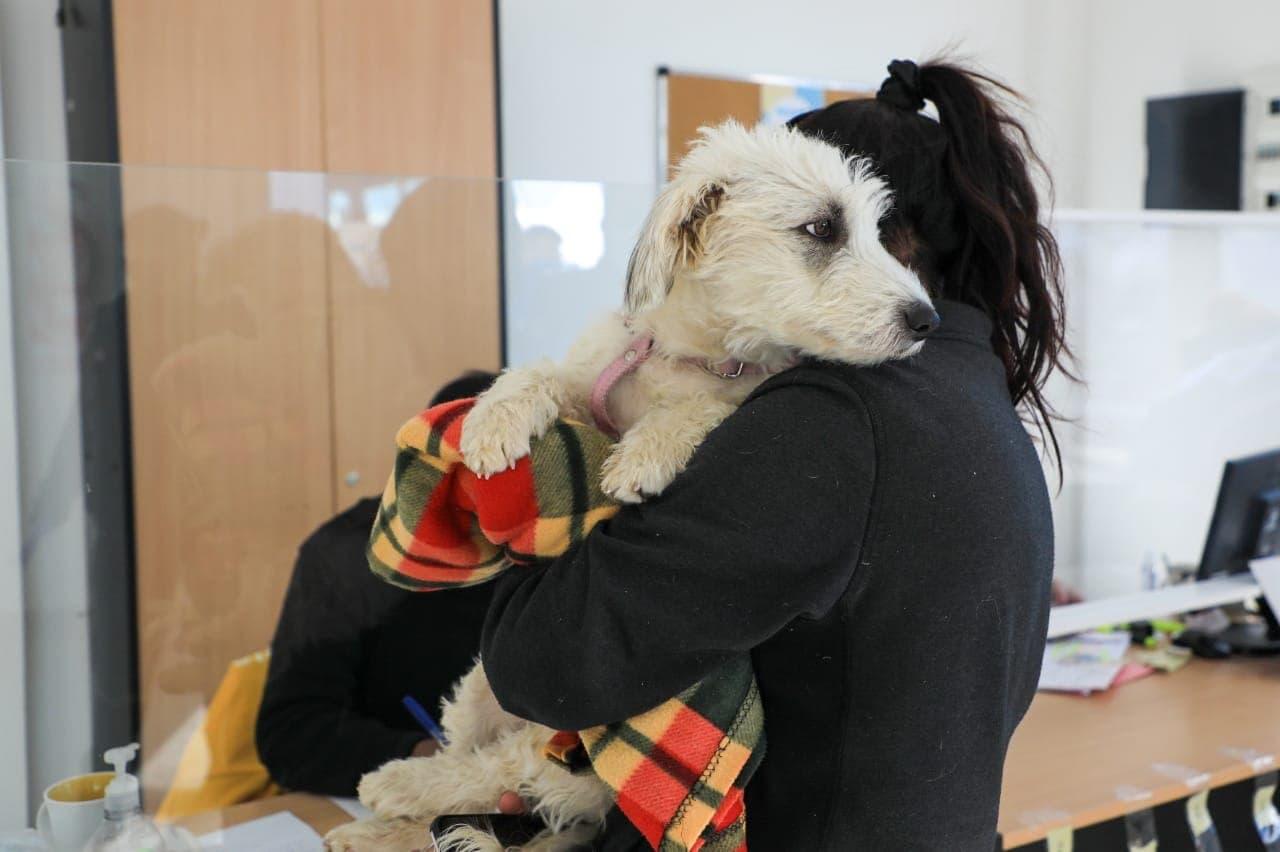 A través del programa de castraciones en los barrios, fueron atendidas más de 150 mascotas